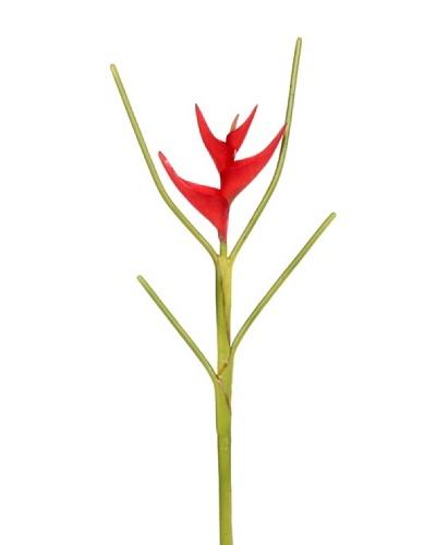 Vara Heliconia