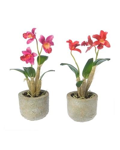 Sia Maceta Dendrobium Modelo Aleatorio
