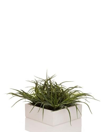 Concoral Concobox Aloe Gris