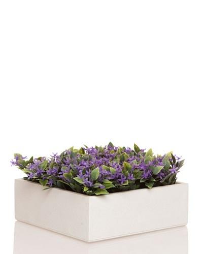 Concoral Concobox Flor Silvestre Lila