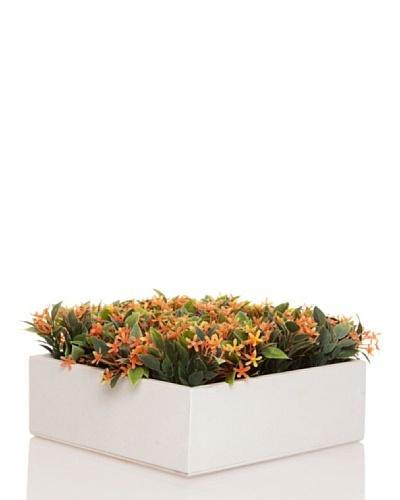 Concoral Concobox Flor Silvestre Naranja