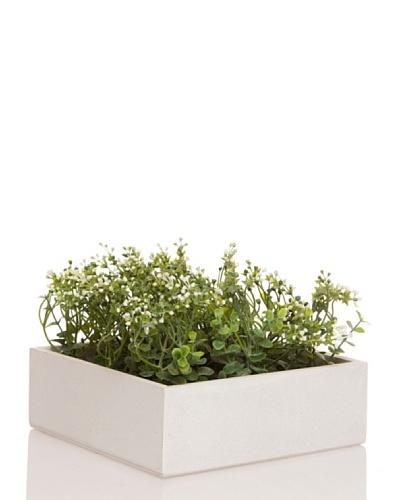 Concoral Concobox Eucaliptus Flor Crema