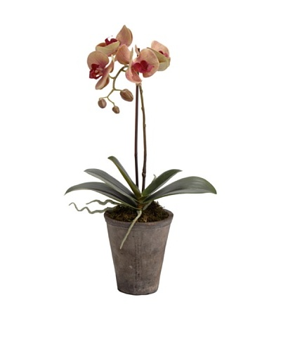 Korb Orquídea Phalae Yukimai Mac 47 cm
