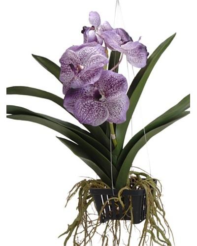 Lou de Castellane Orquídea Vanda Colgante Li