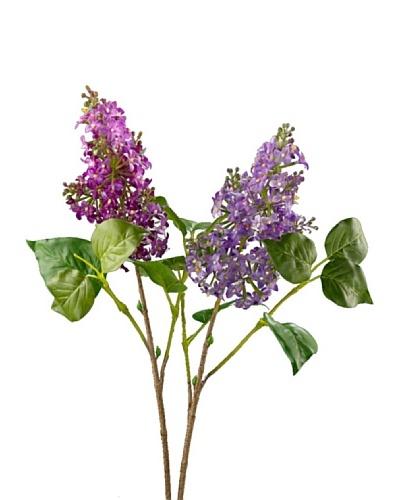 Silea Flor Rama Lilas Morada o Violeta
